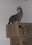 cat on boxes
